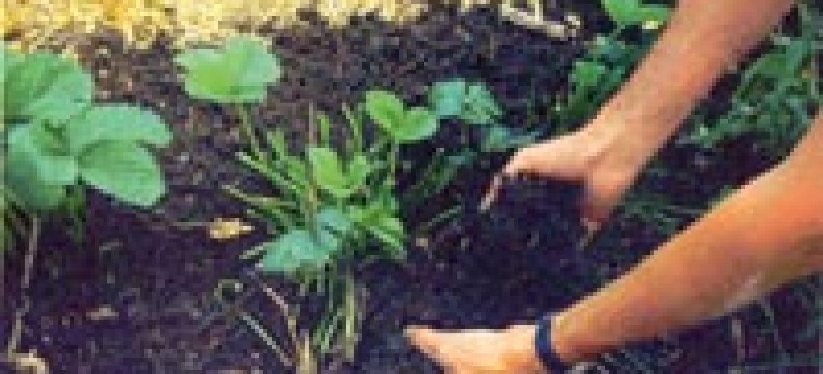 Pesquisa apoiada pela FAPEMA fomenta a prática da agricultura sustentável