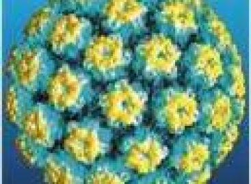 I Seminário Maranhense de HPV