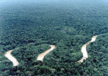 floresta-amazonica-gd