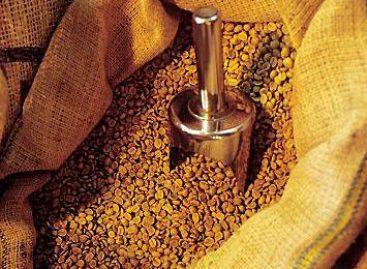 Pesquisa revela resíduos agroflorestais como fonte de energia