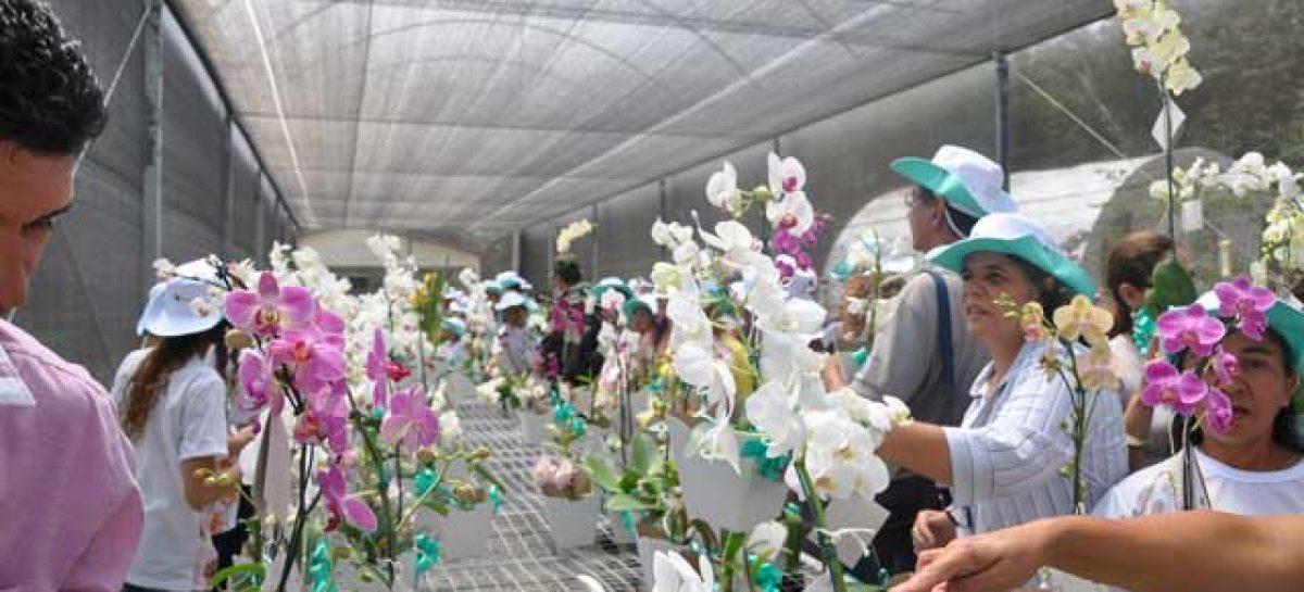 Inaugurado primeiro orquidário aberto a visitação de São Luís
