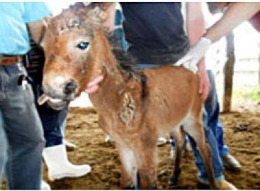 Pesquisador maranhense identifica caso raro de deformidade animal no mundo