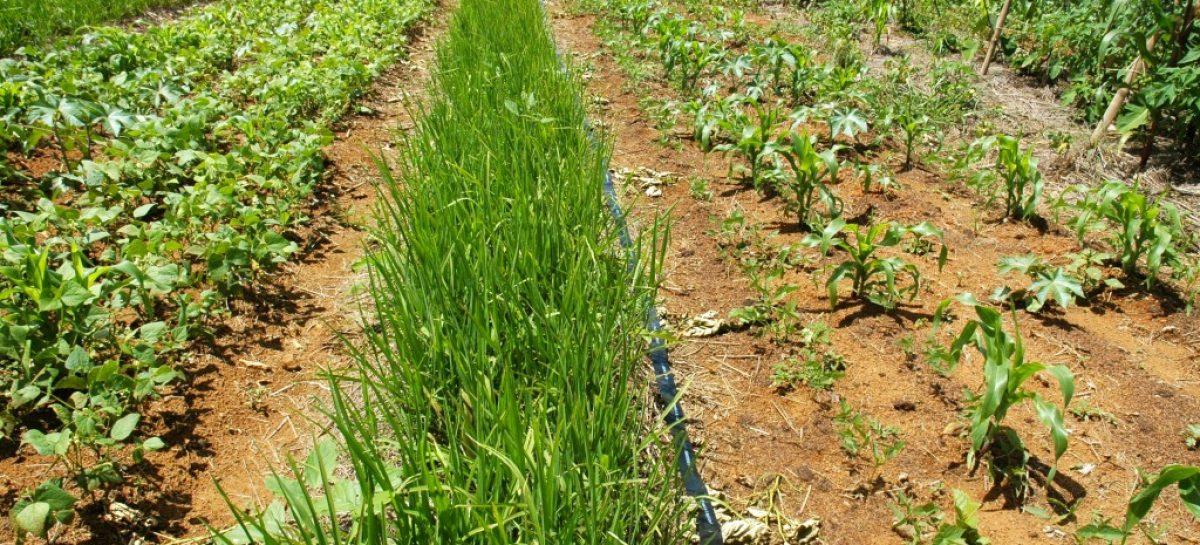 Campus de Chapadinha realiza Workshop e Dia de Campo sobre Intensificação Ecológica da Agricultura no Trópico Úmido