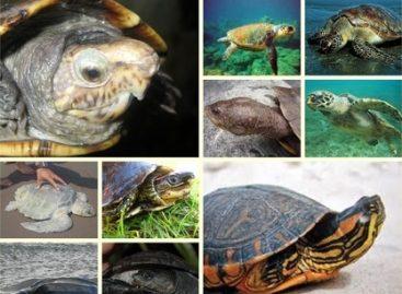 Pesquisadores trabalham para preservar tartarugas no Maranhão