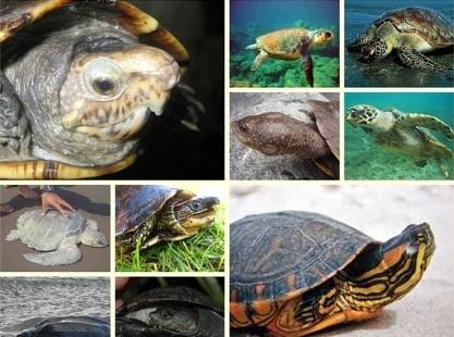 Tartarugas editado