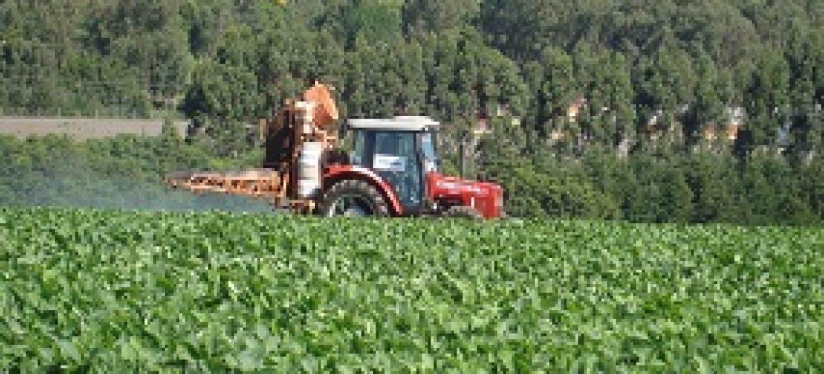 Biocontrole de pragas em lavouras é usado como alternativa aos inseticidas sintéticos no Maranhão