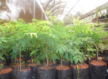Pesquisas sobre botânica resultam em dois livros publicados com apoio da FAPEMA