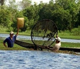 pesca baixada