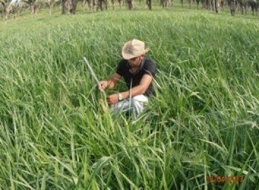 Pesquisa sobre influência da palmeira de babaçu será apresentada na Austrália
