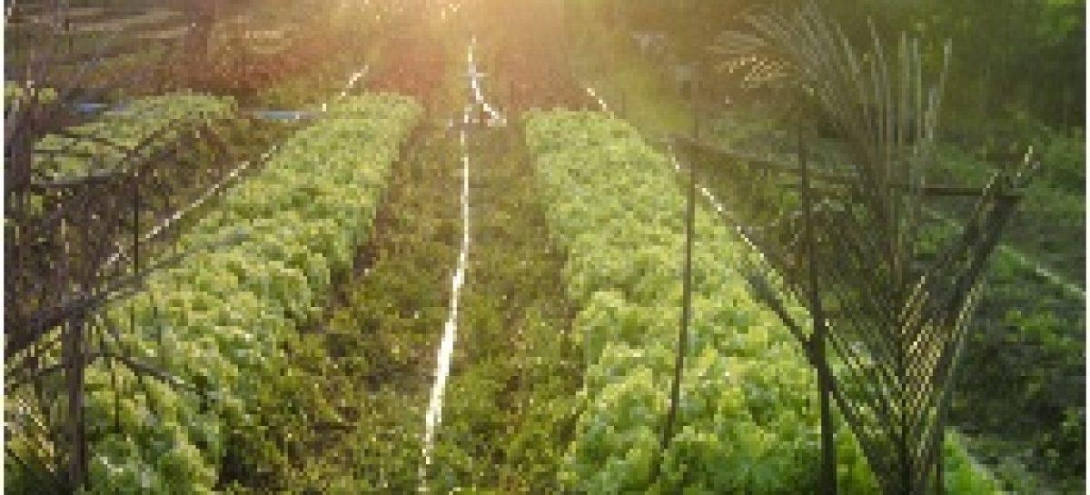 Pesquisadores desenvolvem modelo de agricultura ecológica que beneficia famílias do Maranhão