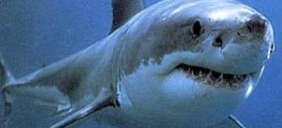 Conferência na 65ª SBPC discute os problemas e mostra soluções para os ataques de tubarão em Pernambuco