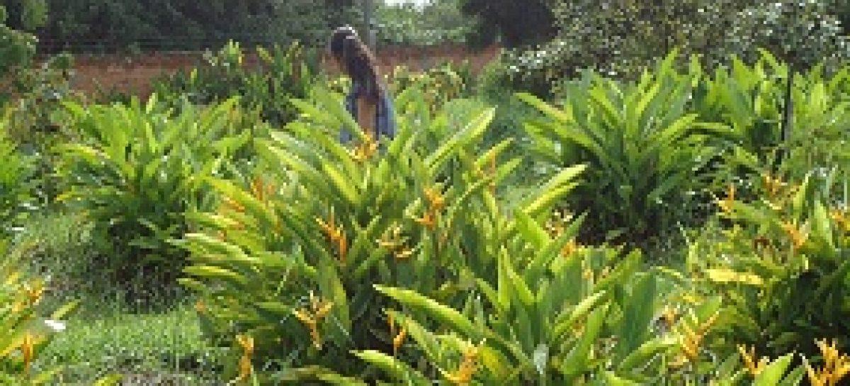 Pesquisa auxilia na identificação de produtos para controlar microorganismos em plantas tropicais