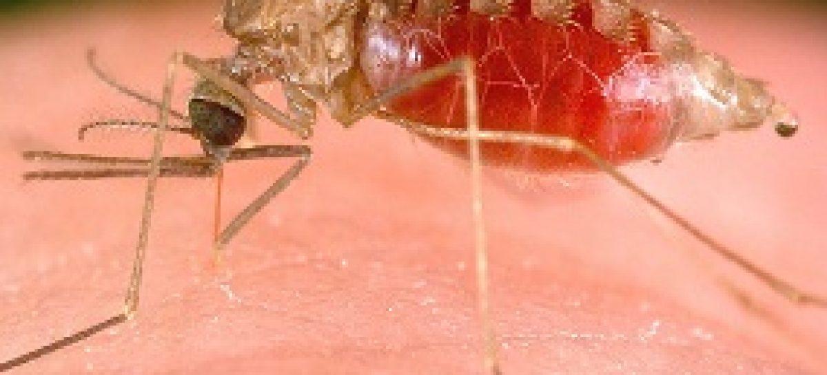 Prêmio FAPEMA 2013: avaliação em pacientes com malária busca novos tratamentos para a doença
