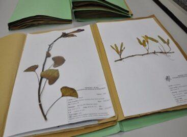 Herbário MAR já conta com 4 mil exemplares de espécies de vegetais de todo o estado