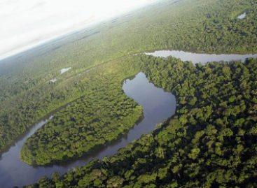 Instituto da Amazônia fará parte de organização estrangeira em prol do reflorestamento