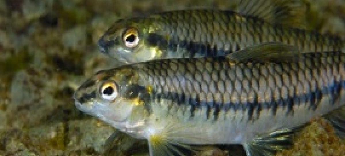 Edital para pesquisa sobre peixes de rios maranhenses ficará aberto até o dia 24