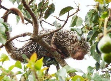 Mapeamento de mamíferos já encontrados no Nordeste revela novas espécies