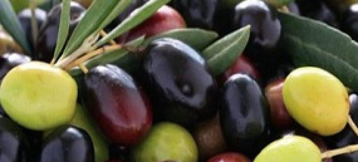 Pesquisa mostra efeito da folha da azeitona preta no combate à obesidade