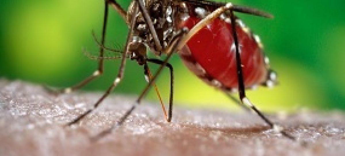 Formas de prevenir a dengue são explicadas em campanha de Educação e Saúde