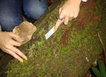 Levantamento de diversidade biológica busca preservação da reserva do Gurupi