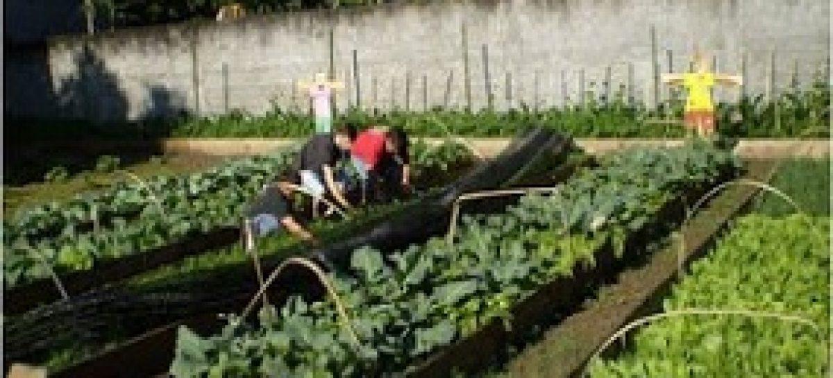 Estudo prevê uso de tecnologias alternativas para produção de alimentos orgânicos no Maranhão