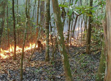 Incêndios ocultos na Amazônia desafiam cientistas