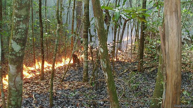 140707121355 amazonia incendios 624x351 bbc nocredit
