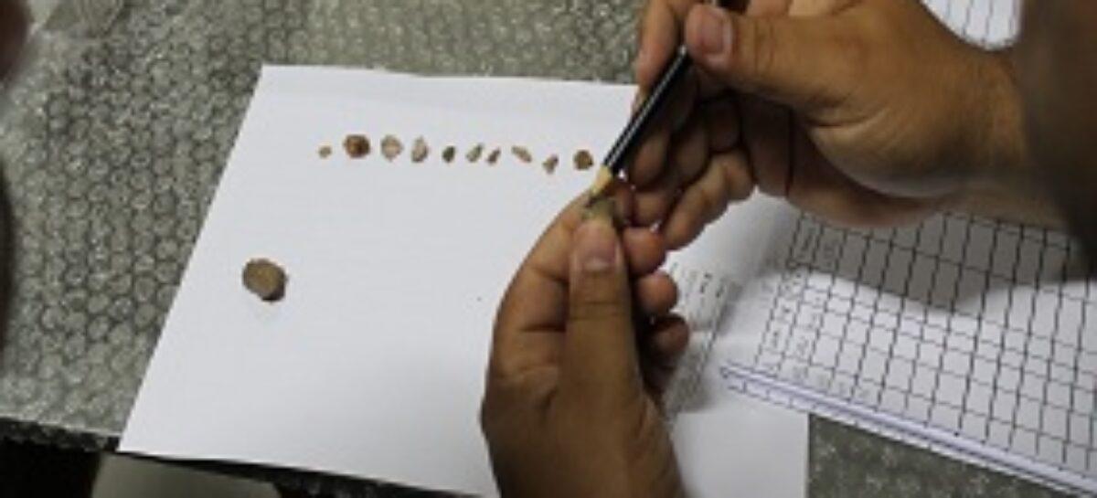 Bolsistas do CBIOMA recebem treinamento em curadoria e análise de coleções arqueológicas