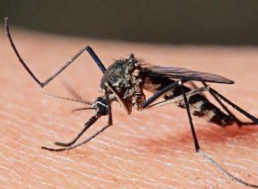Imãs são usados para detectar malária