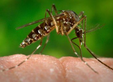 Anticorpo que neutraliza vírus da dengue é descoberto nos Estados Unidos