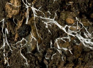 Plantas se comunicam e 'brigam' usando 'internet de fungos'