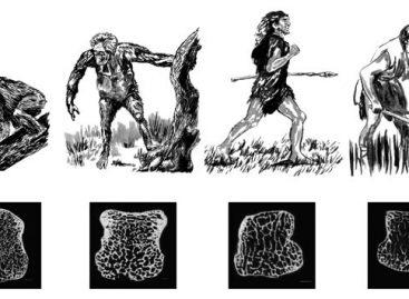 Agricultura deixou ossos do homem moderno menos densos