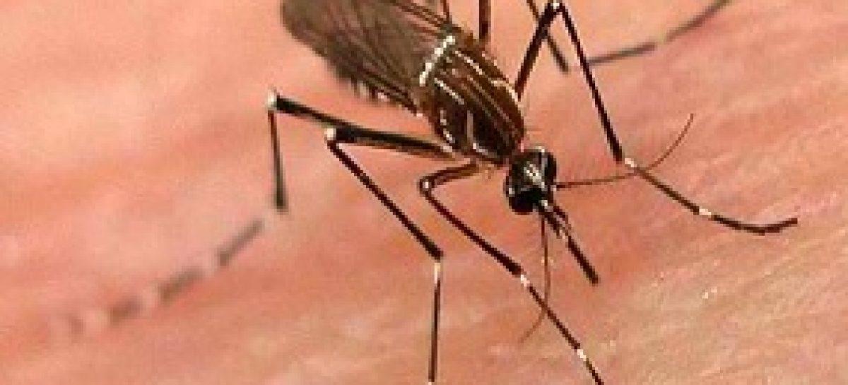 Resultado de imagem para mosquito da dengue