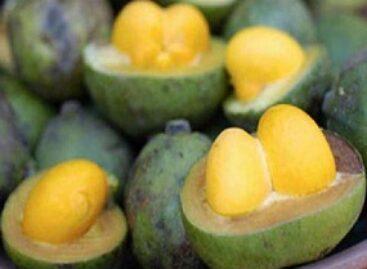 Fruto do cerrado pode gerar mais renda às comunidades extrativistas
