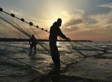 Novas espécies podem dar fôlego comercial à pesca artesanal maranhense
