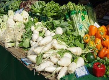 Estudo avalia métodos alternativos de controle de doenças em hortaliças