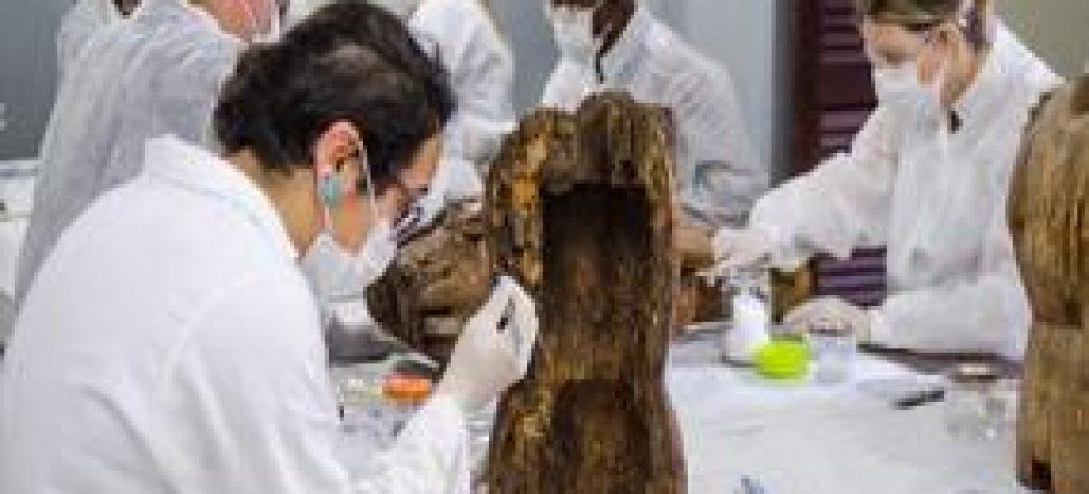Projeto de restauração revitaliza acervo de santos de roca do Museu de Alcântara
