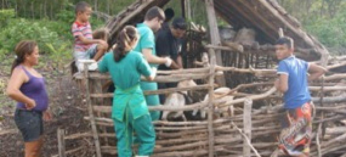 Pesquisadores da UEMA desenvolvem estudo com rebanhos caprino e ovino