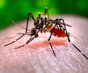 0aedes-mosquito