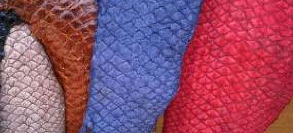Pesquisa analisa potencial tecnológico de peles de peixes comercializados na Baixada Maranhense