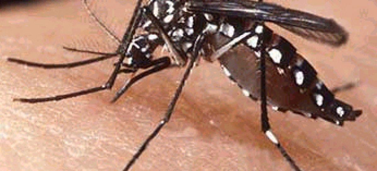 Prorrogado prazo para envio de textos do edital sobre pesquisas contra o mosquito Aedes aegypti