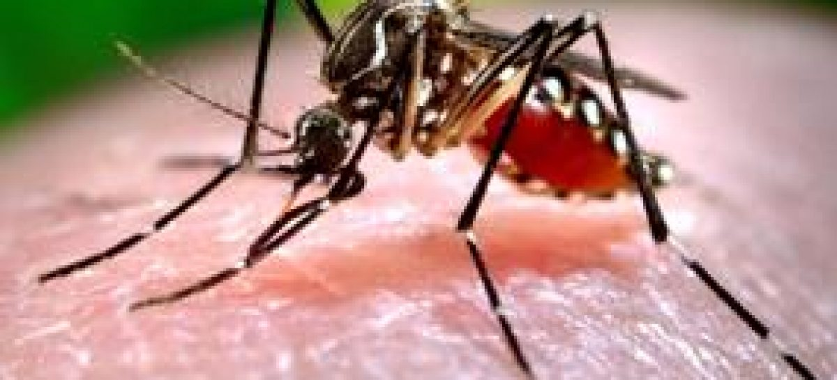 Maranhão recebe pesquisadores do Ministério da Saúde, EUA e Colômbia para discutir epidemia das doenças causadas pelo Aedes aegypti