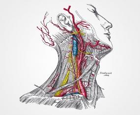 hipertensao-origem