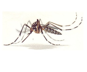 mosquisto-para