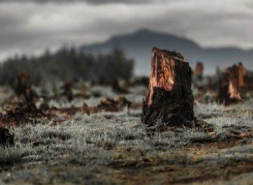 Atividades humanas já danificaram 75% da superfície terrestre
