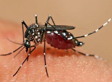 Risco de transmissão de dengue é medido com base no número de fêmeas do Aedes