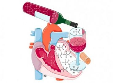 Estudo da USP mostra como o álcool em dose moderada protege o coração