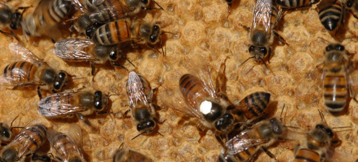 Floresta e uso diversificado do solo preservam abelhas e vespas