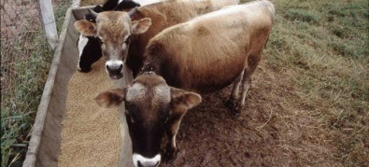 Startup desenvolve probióticos segmentados para nutrição animal