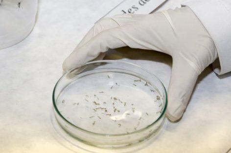 Diagnóstico sorológico específico para Zika é desenvolvido pelo ICB-USP